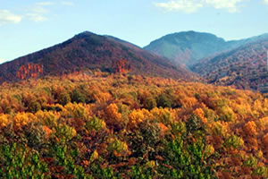Fall Leaves on Display in the Great Smoky Mountains National Park